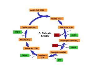 beneficios de los ácidos carboxílicos