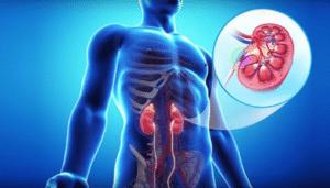 Farmacología del ácido micofenólico Trasplantes
