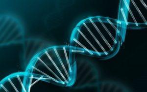 Mecanismo y funciones del ácido nicotínico