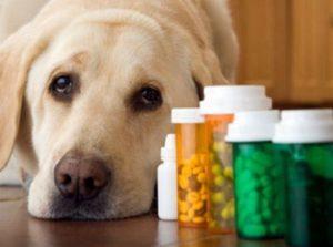 empleo de ácidos fuertes Fármacos veterinarios