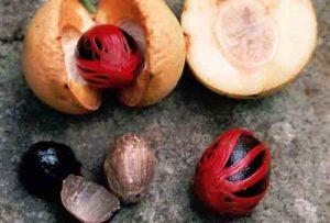 Generalidades del ácido mirístico